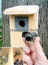 Backyard Wild Birds Hawk Eye Nature Cam Video Camera At Backyard Wild Birds