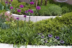 ornamental allium in the garden use plant flower stock