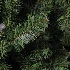 unlit trees picture ideas royal fir slim