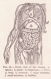 Interior Medical Term Anatomical Terms Of Location Wikipedia