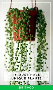 140 best beautiful botanicals images on pinterest plants botany