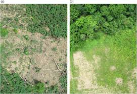bureau avec ag e int r developing a uav based monitoring program with indigenous peoples