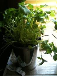 Herb Garden Winter - cooks herb garden books i would like to have pinterest
