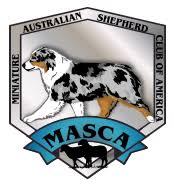 australian shepherd kennel size ridgestar aussies miniature australian shepherds bellingham