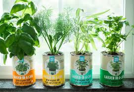 Easy Herbs To Grow Inside Garden In A Can Herb Garden 4 Pack Indoor Herb Garden