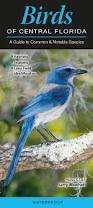 birds of central florida a guide to common u0026 notable species