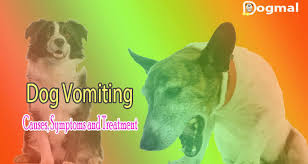 australian shepherd vomiting dog vomiting causes symptoms and treatment