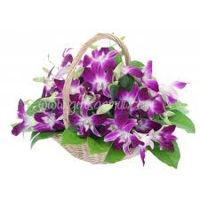 orchid flower orchid flower basket