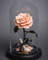 forever roses real beauty and the beast roses exist and they ll last for 3
