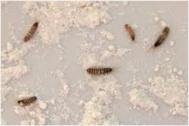 Small Bathroom Bugs Kitchen Countertop Bugs Kitchen Chairs Kitchen Peninsula