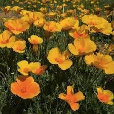 10 best outside images on pinterest annual flowers garden seeds