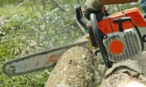 tree removal bradenton tree removal bradenton fl