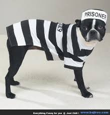 Funny Dog Costumes Halloween 115 Pet Friendly Halloween Costumes Images