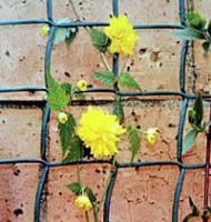 Climbing Plant Supports - climbing plant support mesh climbing support mesh the plant