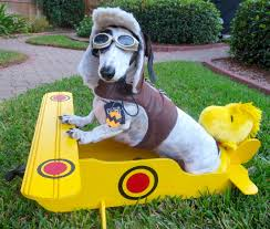 snoopy and woodstock halloween costumes costume contest winners crusoe the celebrity dachshund