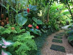 Tropical Plants For Garden - that tropical plants you can grow in the uk and other cold