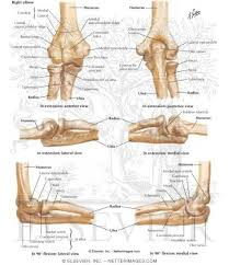 Google Human Anatomy 135 Best Anatomy And Physiology Images On Pinterest Human