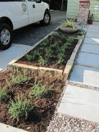 austin texas native plants from weeds to no mow austin style garden u2013 part 2 the plants