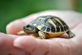 names pet turtles tortoises