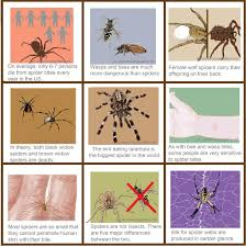 venomous spiders injuries bites statistics and comparisons
