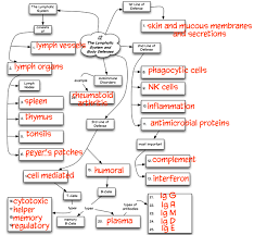 endocrine system concept map chapter 12 concept map truaxbiology com r truax