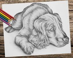 labrador coloring book coloring book coloring