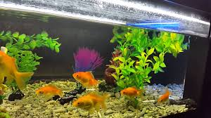 coffee table aquarium tea coffee table aquarium youtube