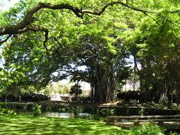 hawaii visitors and convention bureau hawaii communities oahu neighborhoods oahu schools schools in