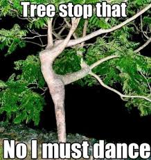 Tree Meme - follow your dreams tree meme guy