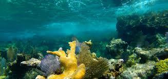 marine resource studies the for field studies
