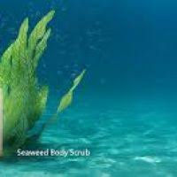 Scrub Makarizo makarizo texture experience scrub sea mineral daftar