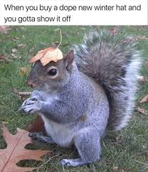 Squirrel Meme - 14 funny animal pics for your monday squirrel animal and funny