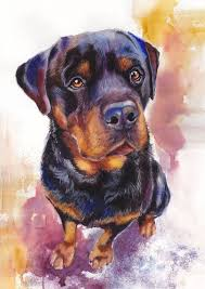 good disciplinable rottweiler on watercolor background tattoo