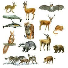mammiferi volanti i mammiferi caratteristiche gestazione e gruppi principali
