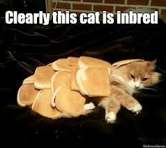 Cat In Bread Meme - clearly this cat is inbred cat meme cat planet cat planet