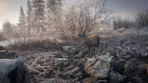 taiga native plants steam community group announcements thehunter call of the wild