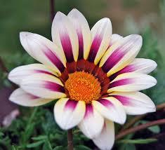 151 best full sun flower garden images on pinterest gardens