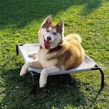 coolaroo elevated indoor outdoor pet cot u0026 reviews wayfair