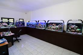 Reef Aquarium Lighting Best Led Reef Lights Aquarium Article Digest