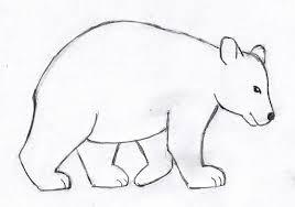 drawing polar bear tags drawing bear skylanders