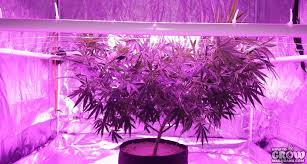 commercial led grow lights led grow ls commercial led grow lights a case study comparing led