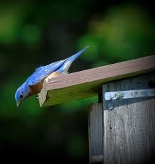 backyard bluebird entertainment u2014 living expression landscapes