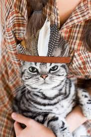 hipster thanksgiving 44 best thankgiving cats images on pinterest animals happy