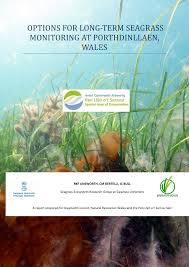 options for long term seagrass monitoring at porthdinllaen wales