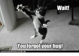 Cat Hug Meme - 25 best memes about grumpy cat grumpy cat memes