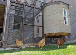 Keeping Free Range Chickens In Your Backyard Backyard Chicken Issues Continue To Ruffle Feathers On Front Range
