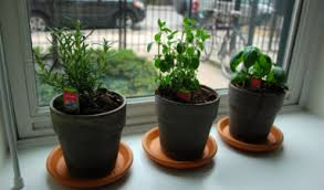 Window Sill Herb Garden Designs Kitchen Windowsill Herb Garden Happily Occupied Homebodies