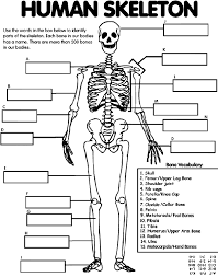 human skeleton crayola uk