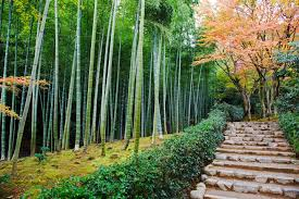 Get lost and find tranquility in this serene Japanese bamboo grove