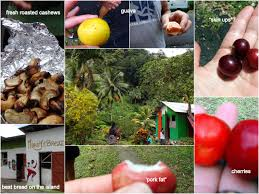 incredibly edible delights and even more dominica d g sail